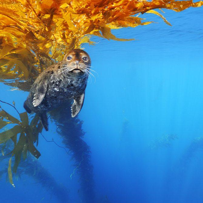 Brian Skerry Sea Lion